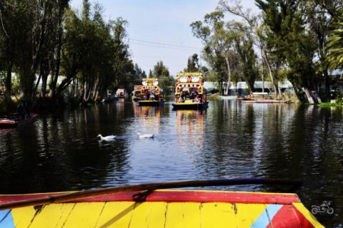 Two ducks pass through the maze of boats along the canals at Xochimilco