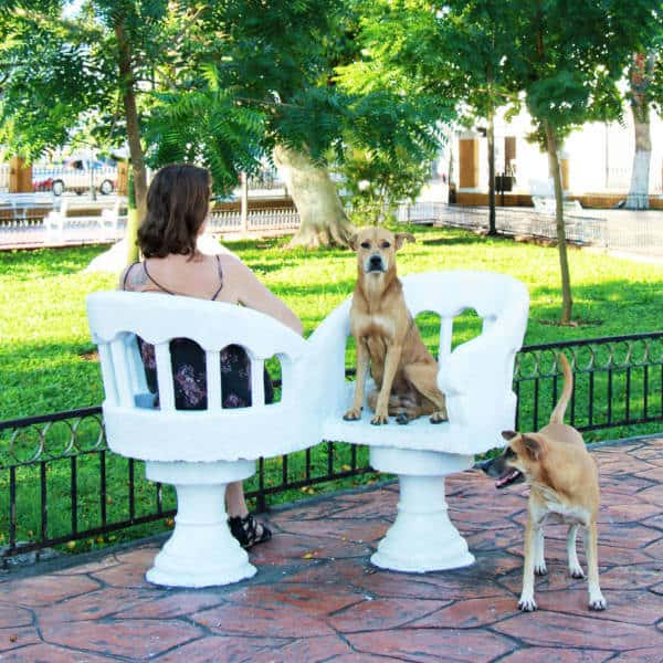A woman sits with her dogs on the you and me chairs at the Valladolid Zocalo.