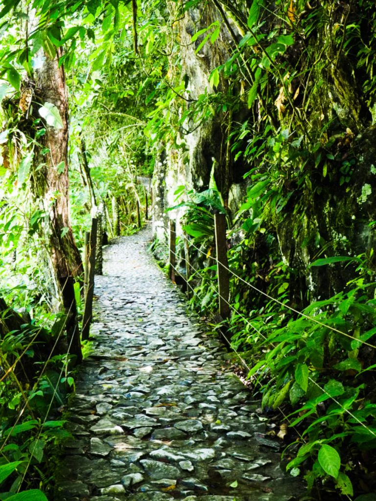 A clear stone path lined with trees through the tropical rain forest leads the way through Reserva Rio Claro.