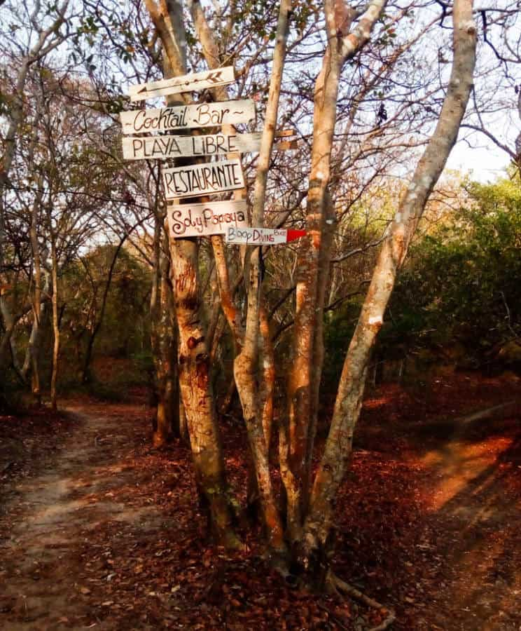 Hand-painted wooden signs hang on the branches of a tree to tell you which direction to head on Isla Grande.
