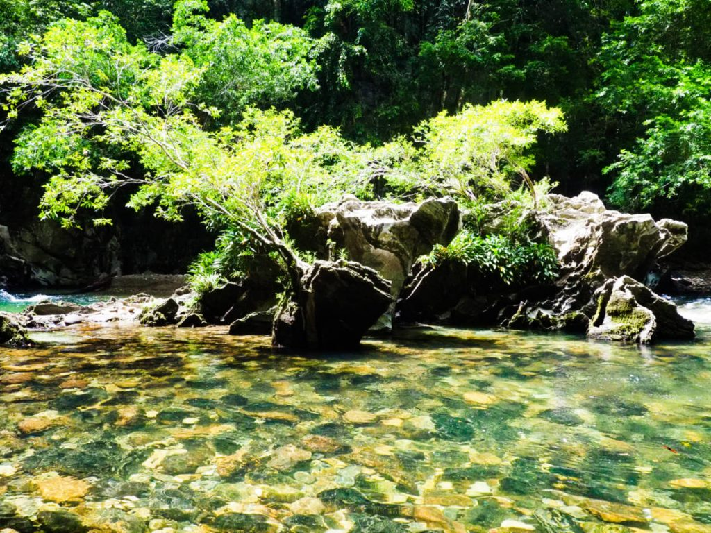 Large rock stones line the bottom of the clear river. Plant life grows on top of the larger rocks in the center of the river.