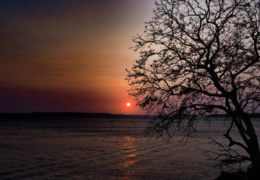 A tree silhouetted in the sunset on Isla Grande, overlooking the water.
